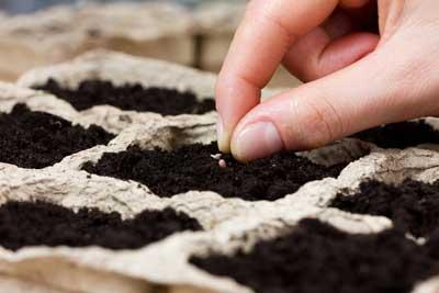 plantingseed